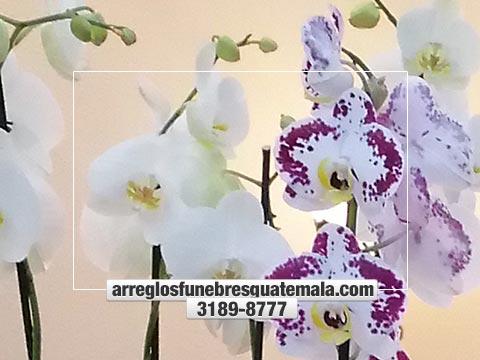 envio de orquideas para funeral hoy