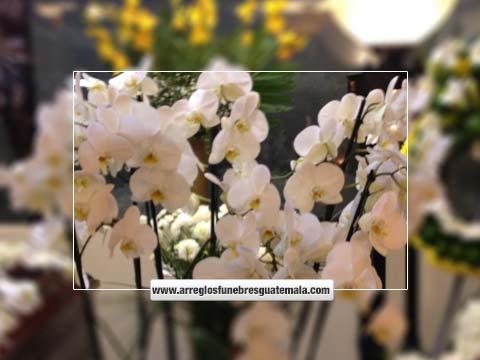 orquideas para funeral